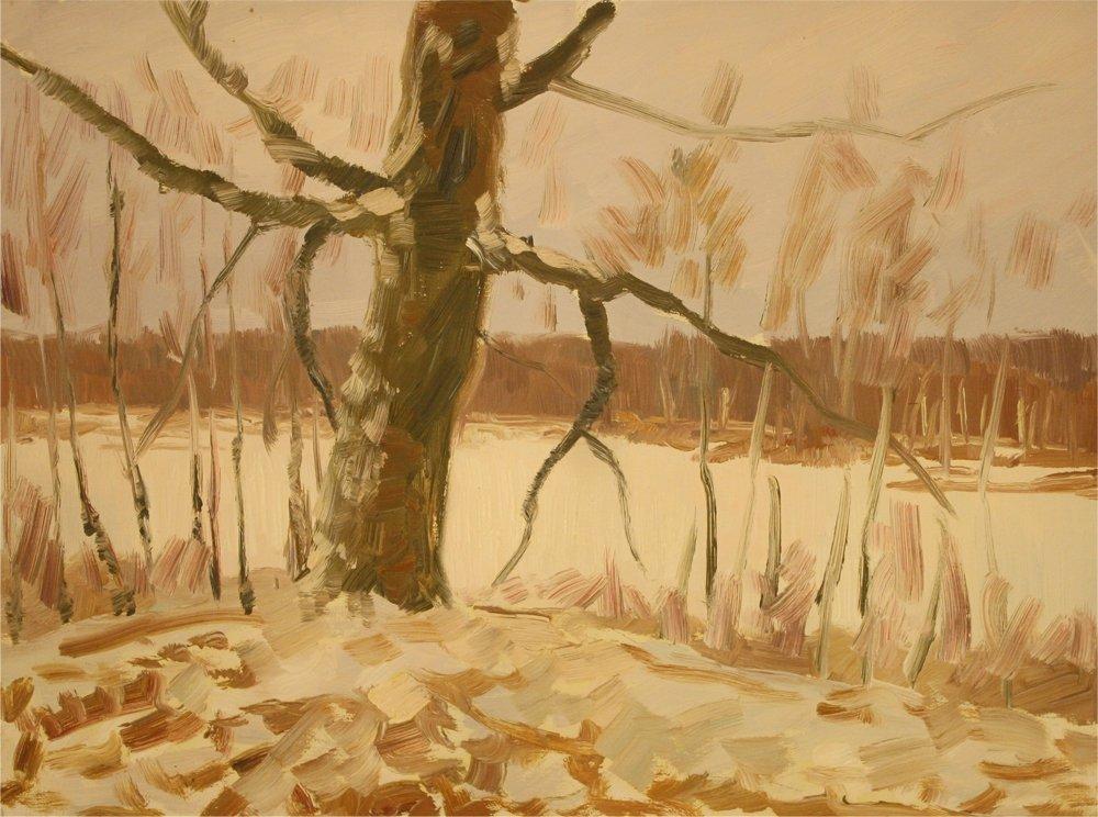 Лісова тиша