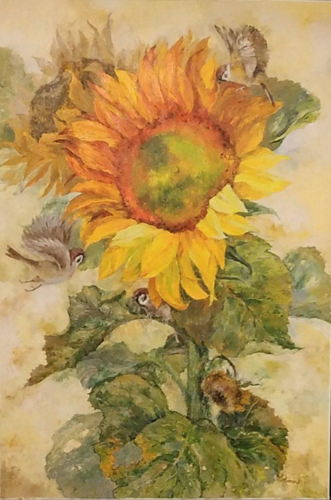 Ripe sunflower